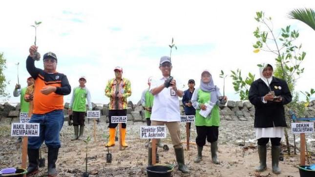 PT Asuransi Kredit Indonesia (Persero) atau Askrindo bekerjasama dengan Universitas Tanjungpura Pontianak tanam Mangrove di pesisir pantai Desa Sengkubang, Kabupaten Mempawah
