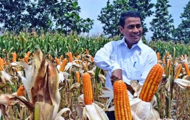 Menteri Pertanian Amran Sulaiman panen jagung (Foto Dok Industry.co.id)