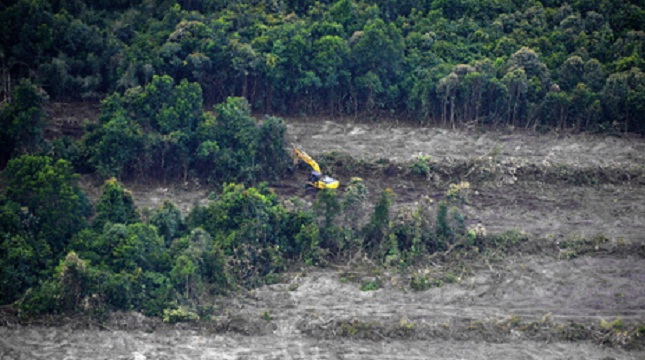 Ilustrasi perambahan hutan untuk kebun sawit. (Bay Ismoyo/AFP)