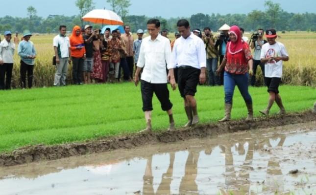 Presiden Jokowi dan Mentan Amran Sulaiman (Foto Dok Industry.co.id))