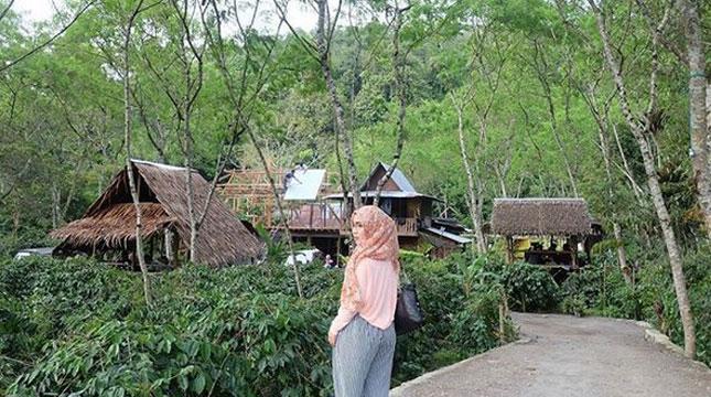 Seladang Coffee di Kecamatan Wih Pesam, Kabupaten Bener Meriah, Aceh (Foto: @abdia_dia/Instagram)