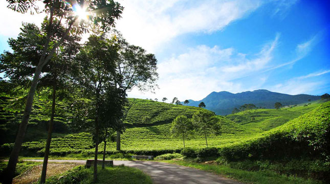 Agrowisata Perkebunan Tlogo Semarang (Foto: wisataindonesia.biz)