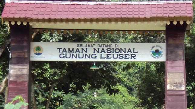 Taman Nasional Gung Leuser (TNGL) (ilmuhutan.com)