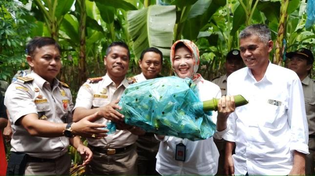 Kepala Badan Karantina Pertanian, Kementerian Pertanian, Banun Harpini saat melepas ekspor perdana pisang Mas Tanggamus ke Cina