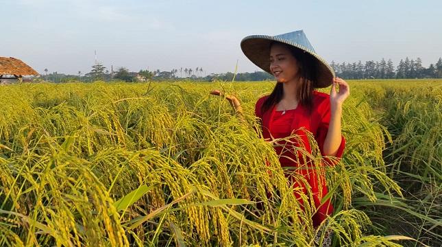 Petani desa di tengah sawah (Foto: Dok Industry.co.id)