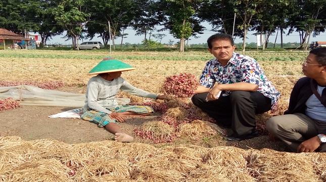 Dirjen Hortikultura, Suwandi memegang hasil panen bawang merah