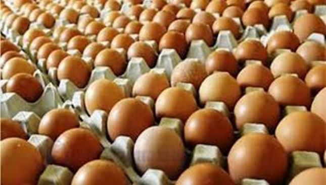 Telur ayam (Foto Dok Industry.c.id)