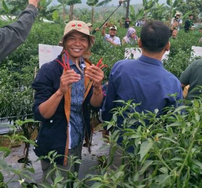 Cianjur Sebagai Penyangga Cabai Jabodetabek (Foto Dok Industry.co.id)