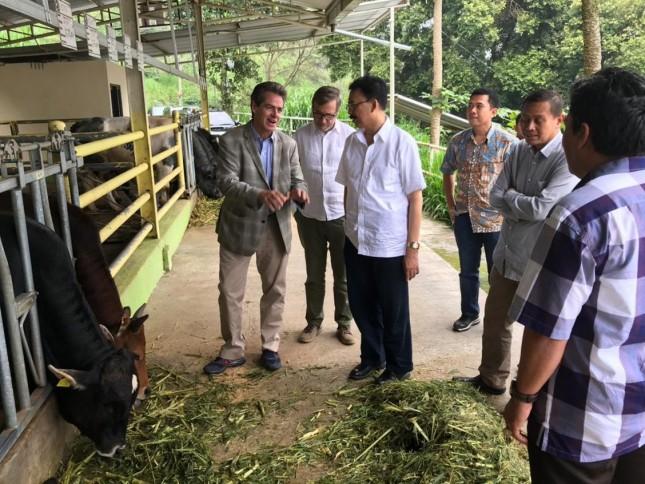 Sekjen Kementan Syukur Iwantoro meninjau peternakan sapi