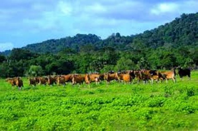 Taman Nasional Alas Purwo (Foto Dok Industry.co.id)