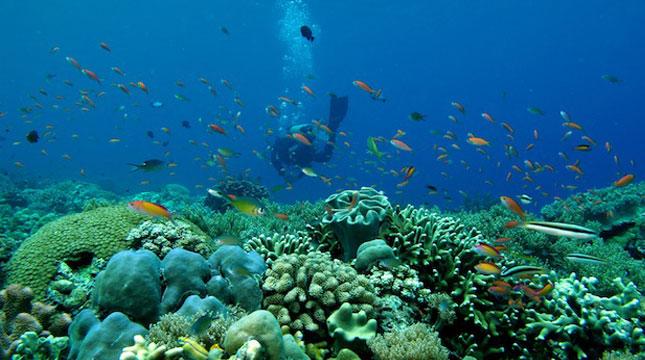 Keindahan Bawah Laut di Kabupaten Kepulauan Selayar (Foto:kaltim.tribunnews)