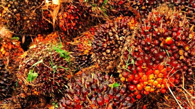 kelapa sawit