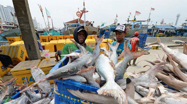 Ilustrasi aktivitas nelayan. (Dimas Ardian/Bloomberg via Getty Images)