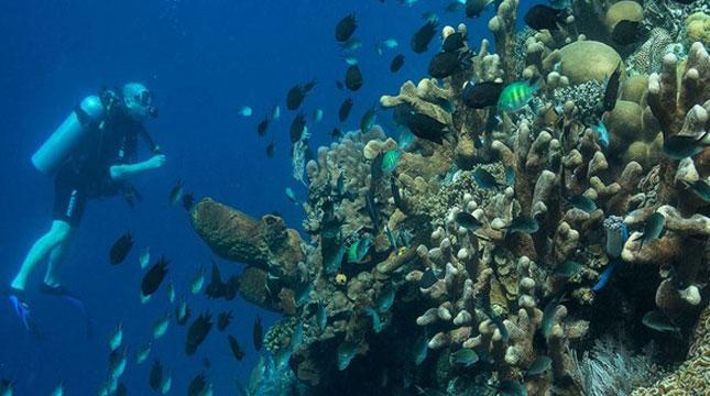 Wisatawan Diving di Bunaken, Manado, Sulawesi Utara (Foto:_an___dy_/Instagram)