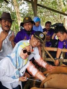 Punya Potensi, Kementan Dorong Luwu Utara Garap Pembibitan Sapi Potong (Foto Dok Industry.co.id)