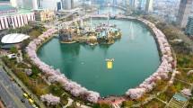 Festival Cherry Blossom Seokchonhosu Lake (Foto: news.sbs.co.kr)