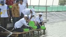 Menteri Badan Usaha Milik Negara (BUMN), Rini M. Soemarno Meninjau Langsung kawasan Perhutanan Sosial Muara Gembong di Kabupaten Bekasi, Provinsi Jawa (Foto: Istimewa)