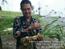 Dirjen Hortikultura Kementan Suwandi (Foto Dok Industry.co.id)