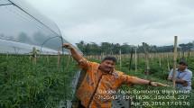 Direktur Sayuran dan Tanaman Obat Kementerian Pertanian, Prihasto Setyanto