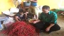 Dirjen Horti, Suwandi memegang hasil panen cabai