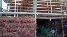 Sentra bawang merah