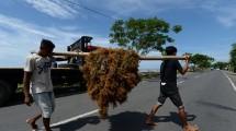 Petani rumput laut di Bantaeng, Sulawesi Selatan. (Dimas Ardian/Bloomberg)