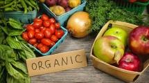 Ilustrasi sayuran organic