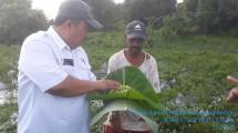 Direktur Sayuran dan Tanaman Obat Ditjen Hortikultura, Prihasto