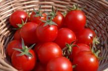 Ilustrasi Tomat (Foto: Familinia)