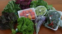 Sayuran (Foto Anto)