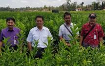 Dirjen Hortikultura Kementan