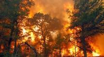 kebakaran hutan dan lahan (karhutla).