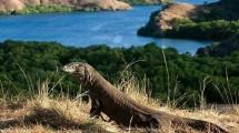 Taman Nasional Komodo (Foto:Kaskus)