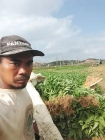 Kelompok petani sayuran