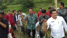 Suwandi, Dirjen Hortikultura saat tanam bawang putih di Solok