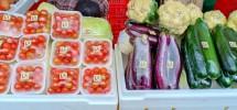 Sayuran hasil pertanian