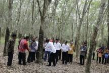 Perkebunan pohon karet