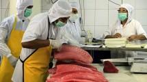 Ekspor Ikan Tuna (Rizki Meirino/Industry.co.id)