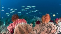 Terumbu karang di Kepulauan Raja Ampat, Papua. (Ullstein Bild/Getty Images)