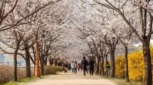 Ilustrasi wisata Korea Selatan. (Foto: IST)