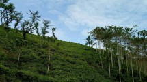 Hamparan Perkebunan Teh Kertowono (Chodijah Febriyani/INDUSTRY.co.id)