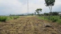 Ilustrasi lahan menganggur. (Foto: IST)