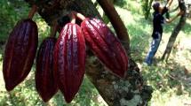 Kakao (kakaoindonesia)