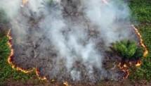 Ilustrasi Kebakaran Hutan dan Lahan (Foto ist)