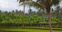 Ilustrasi kebun kelapa. (Foto: Education Images)