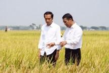 Menteri Pertanian Amran Sulaiman dan Presiden Jokowi (Foto (Humas)