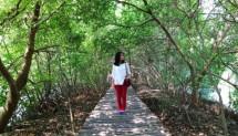 Hutan Mangrove Pantai Indah Kapuk