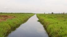 Tanah Gambut (Ali Fahmi / jurnalbumi)