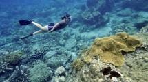 Ilustrasi Wisatawan Mancanegara Snorkeling di Bunaken, Manado, Sulawesi Utara (ROMEO GACAD/Staff/Getty Images)