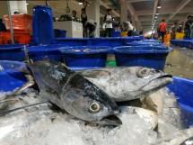 Perum Perindo - Blanja Ikan #darirumahaja
